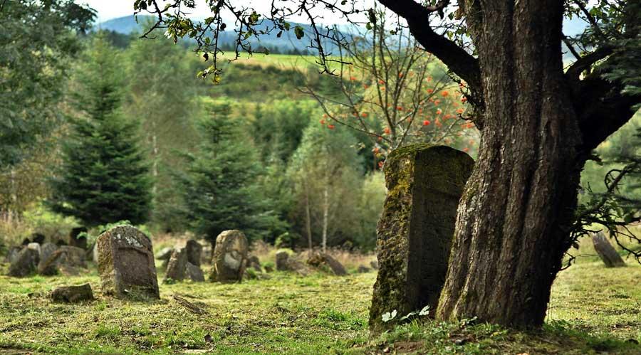 Cimiteri nella natura come natura come città